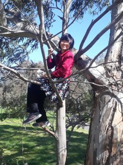 Zai in a tree